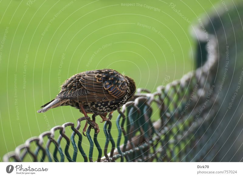 Nature Green White Animal Yellow Grass Small Brown Pink Metal Bird Park Fear Sit Wild animal Fence