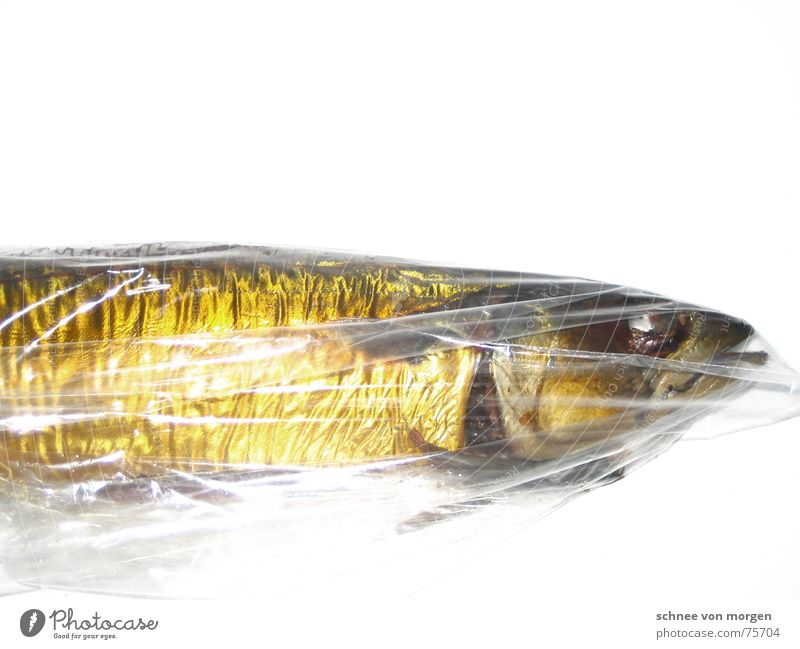 no water Mackerel Death Ocean Past Gill Yellow Glittering Empty Food Nutrition Nature Environment fish Water sea Eyes Gold Calm Line Skin Muzzle Mouth Smoked