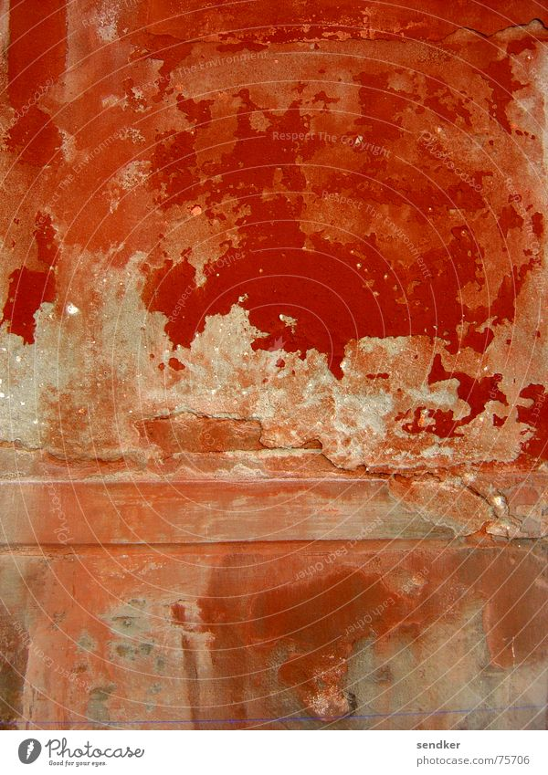 Red Red Wall (building) Plaster Italy Venice Flake off Transience Old Decompose Colour