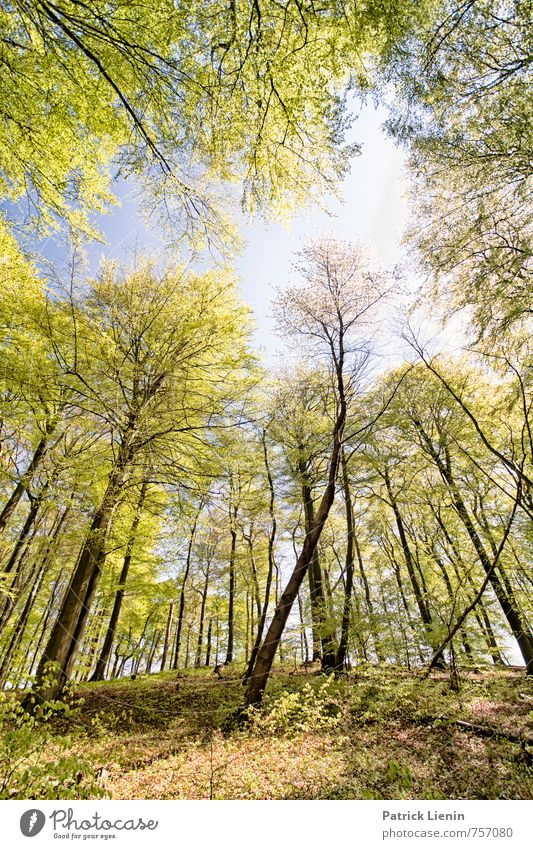 spring forest Wellness Life Harmonious Well-being Contentment Senses Relaxation Calm Vacation & Travel Tourism Trip Adventure Far-off places Freedom Environment
