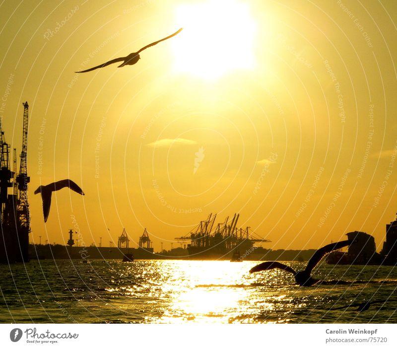 Water Beautiful Sun Clouds Sadness Moody Waves Hamburg 3 Grief Harbour Goodbye Jetty Seagull Crane Dusk