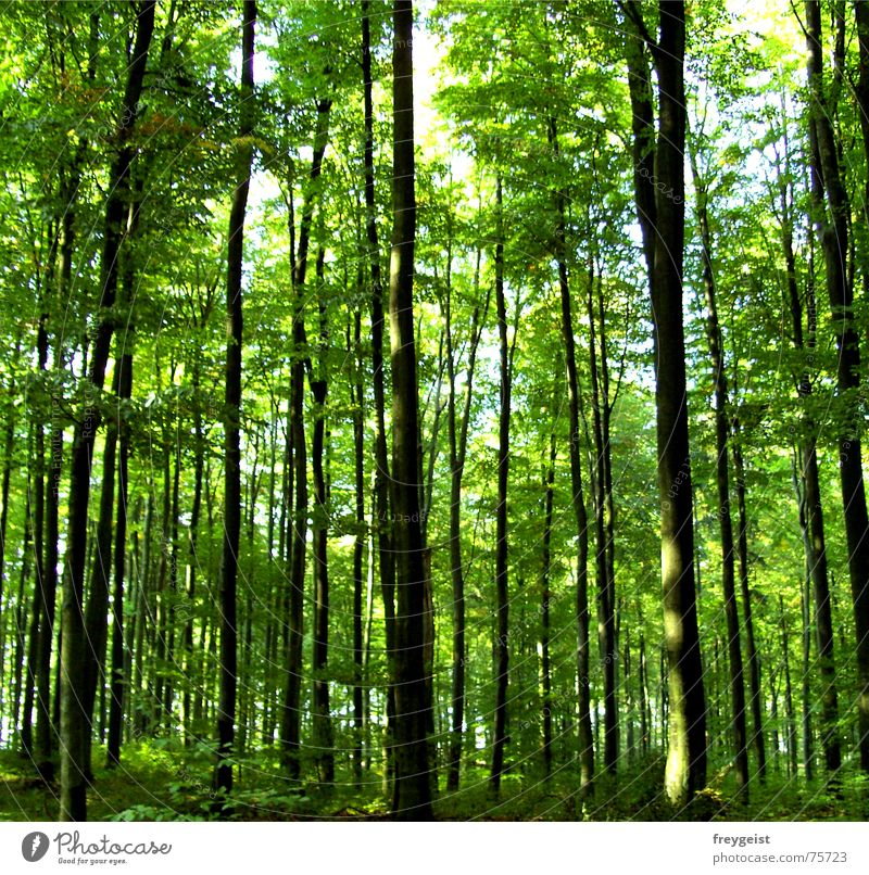 Green Tree Relaxation Calm Forest Contentment Idyll To go for a walk Harmonious