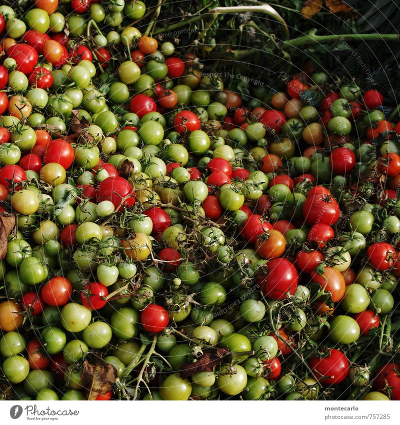 Thanksgiving the other side of the coin. Food Vegetable Tomato Bush tomato Environment Nature Plant Agricultural crop Observe Old Authentic Fresh Healthy
