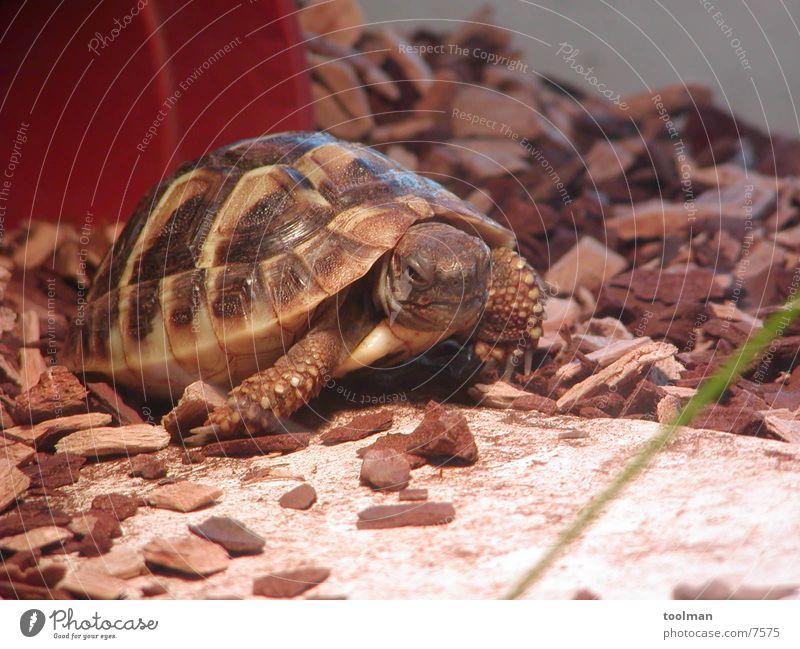 turtle Turtle Animal Nature Armor-plated