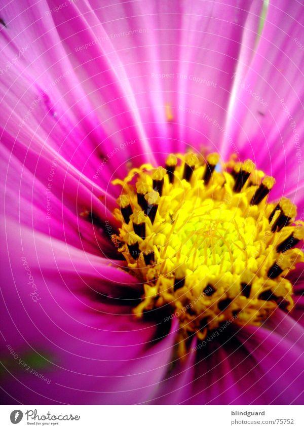 Joy Yellow Blossom Garden Pink Circle Seed Gardener