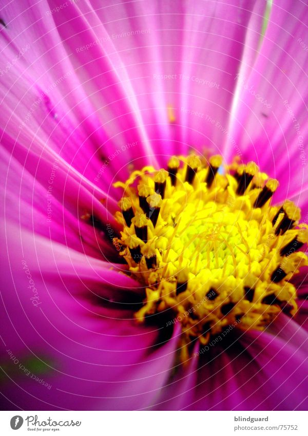 Only e Flower Yellow Pink Macro (Extreme close-up) Blossom Gardener Seed garden nature Multicoloured Circle Joy flower Illuminate