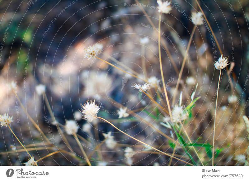 Nature Green White Plant Loneliness Flower Cold Environment Grass Blossom Brown Field Bushes Hope Desert Fragrance