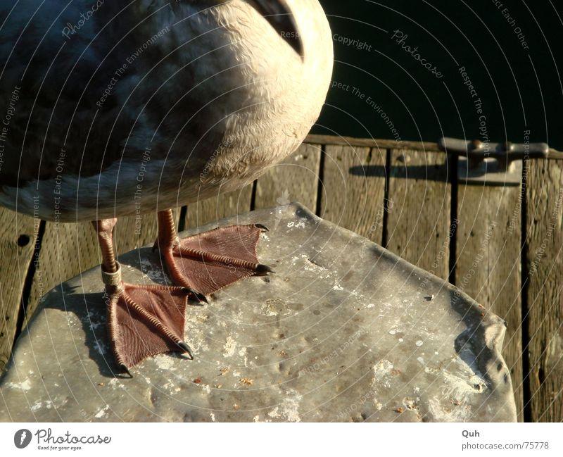 Ocean Animal Wood Feet Lake Legs Bird Feather Footbridge Seagull Beak Pole Rubber Claw Bollard