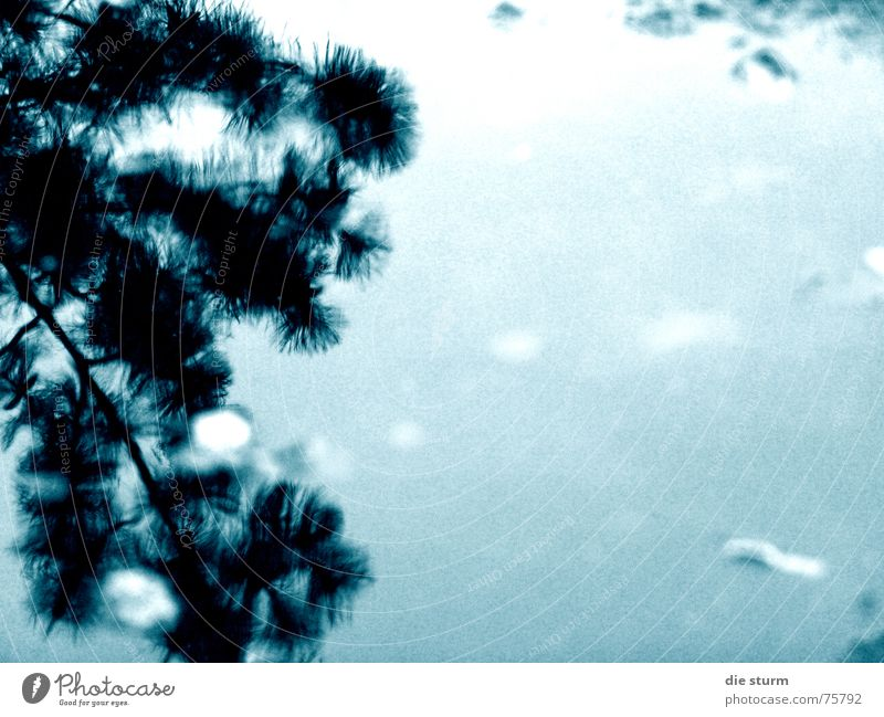 Water Plant Leaf Rain Branch Surrealism Puddle Bad weather