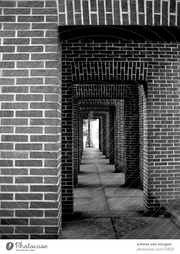 Tree Black Dark Autumn Gray Stone Wall (barrier) Lanes & trails Line Bright Concrete Modern Target Brick Vertical