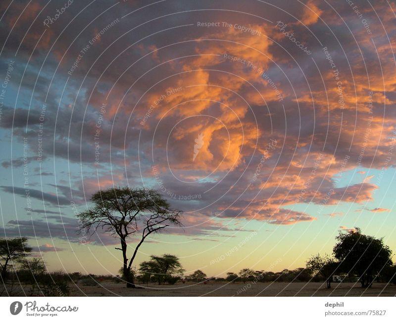 burning sky Twilight Sunset Clouds Steppe Tree Africa Namibia Etosha pan Vacation & Travel South Evening Sky Landscape
