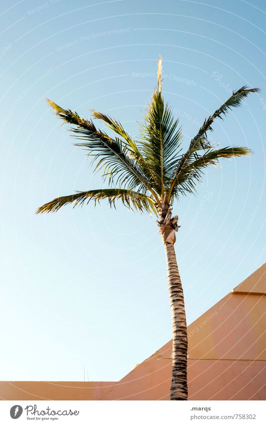 palm Vacation & Travel Far-off places Cloudless sky Plant Exotic Palm tree Architecture Simple Bright Beautiful Moody Esthetic Relaxation Colour photo