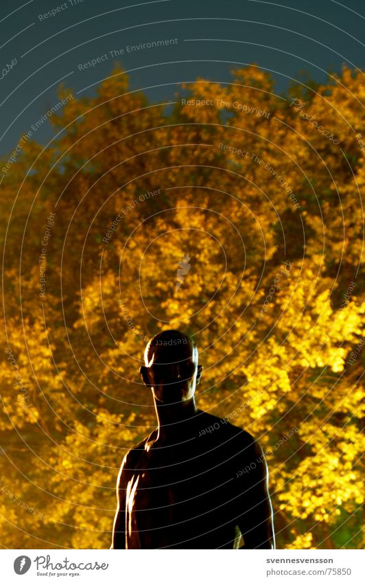 A little man stands quietly and mutely in the forest... Sculpture Man Masculine Light Tree Leaf Autumn Museum island Night Night shot Berlin Gold Silhouette