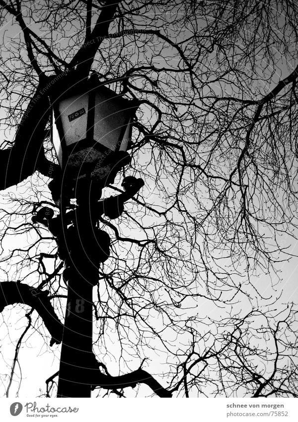 sunday, late afternoon Leafless Tree Lantern Black Calm Light Autumn Sunday Afternoon Winter Wood Environment Sky Nature Black & white photo Boredom leaves fall