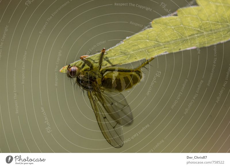 clinging Environment Nature Plant Animal Leaf Foliage plant Forest Dead animal Fly Bee Wing 1 Exceptional Dark Small Near Green Calm Sadness Grief Death