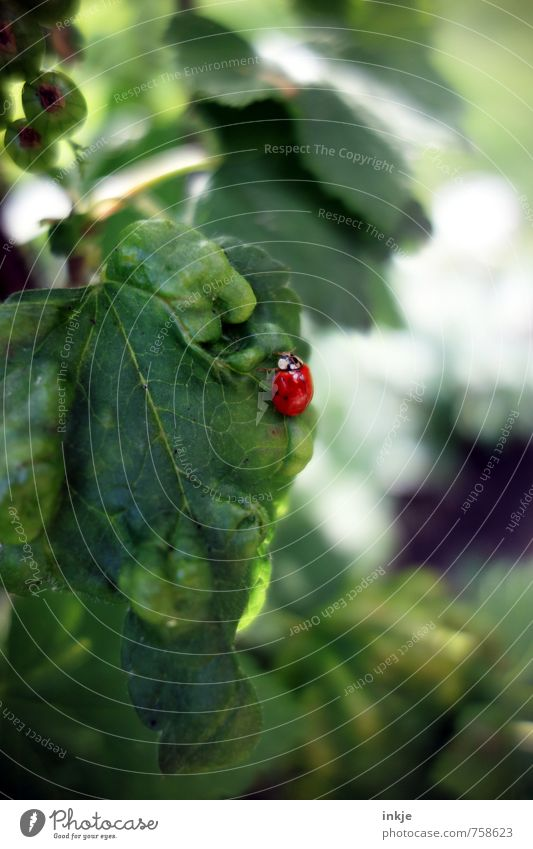 Nature Green Colour Plant Summer Red Leaf Animal Spring Small Natural Fresh Beautiful weather Near Beetle Crawl