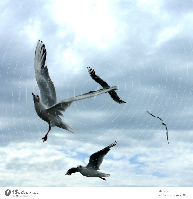 Sky Nature Blue Clouds Animal Freedom Lake Bird Wind Aviation Seagull Gale Flock Independence Judder Weightlessness