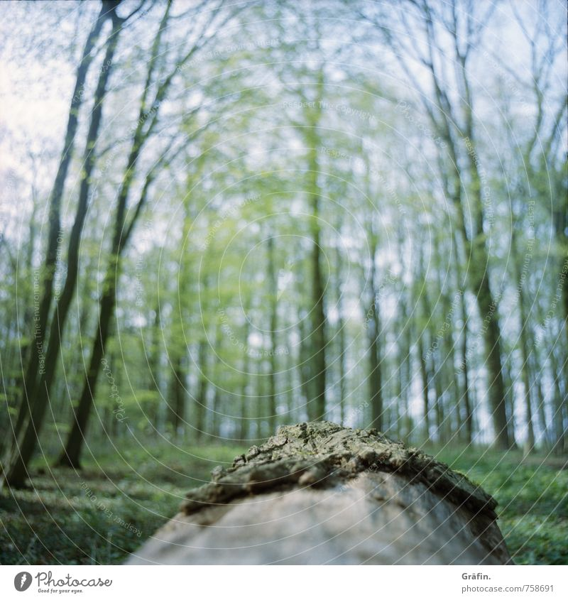 Forest from the point of view of a beetle Nature Landscape Spring Tree Moss Foliage plant Tree trunk Deserted Observe Discover Relaxation Infinity Brown Green