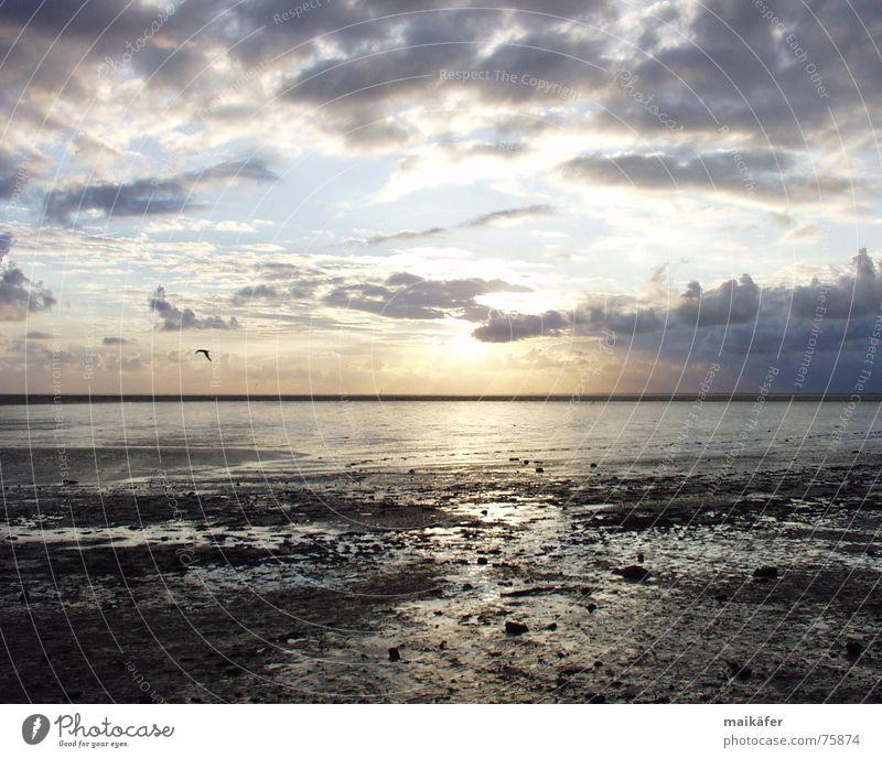 Water Sky Sun Ocean Blue Red Clouds Sand Orange Bird Glittering Horizon Seagull North Sea Mud flats