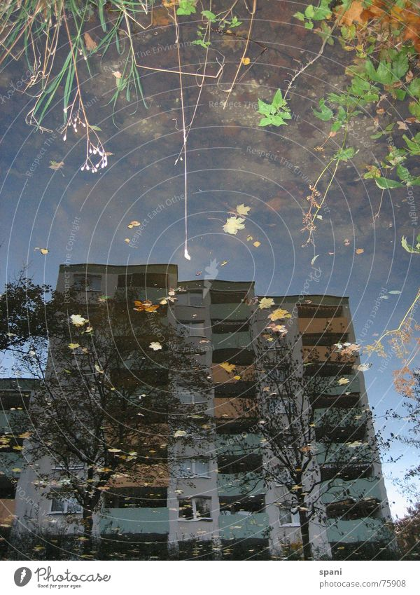 Flower House (Residential Structure) River Transience Mirror image Body of water Inaccurate