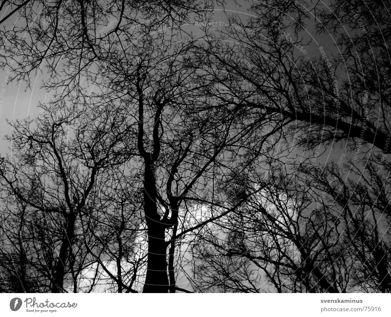 Sky Tree Black Clouds Loneliness Far-off places Forest Dark Cold Tree trunk Treetop