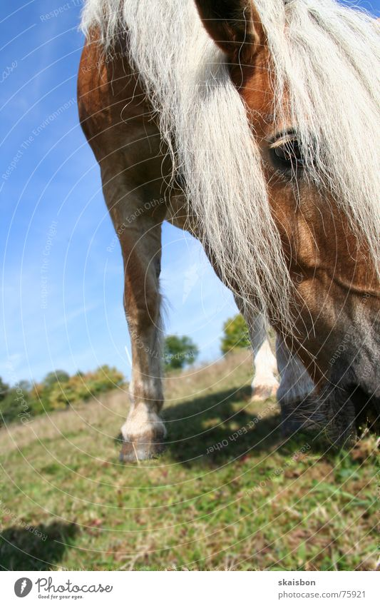 Nature Summer Animal Eyes Landscape Nutrition Playing Hair and hairstyles Leisure and hobbies Stand Horse Pelt Near Pasture Farm Serene