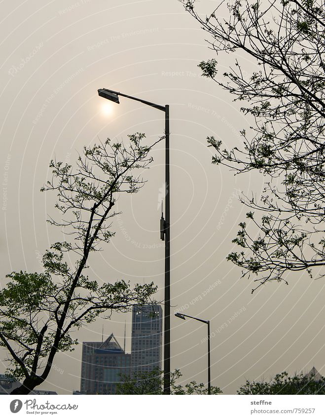 City Sun Tree City life Modern High-rise Street lighting Lantern Flag Downtown China Environmental pollution Smog Overpopulated Beijing
