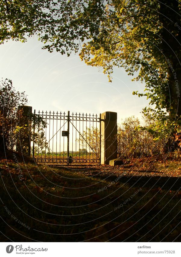 Looking back Gate Cemetery Calm Infinity Rest Death Worm's-eye view Back-light Wrought iron Wrought ironwork Pole Autumn Moody Grief Forget Memory Paradise