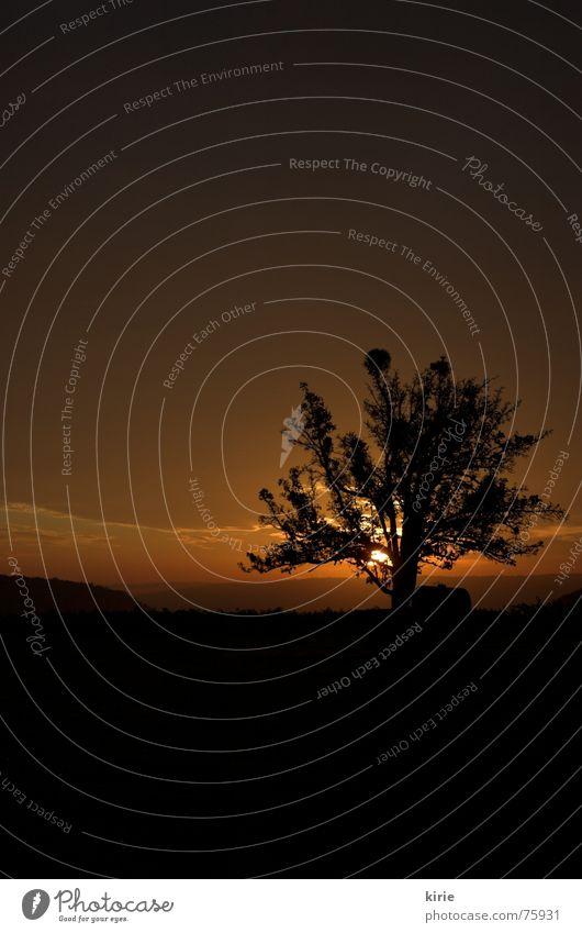 good morningähn Tree Morning Physics Dark Sunrise Meadow Damp Fog Vineyard Exterior shot Dawn Warmth Sky Dusk Vacation & Travel Sadness