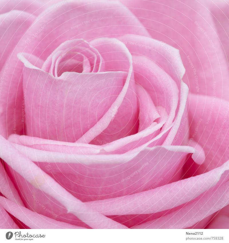 Nature Plant Summer Environment Blossom Love Emotions Spring Natural Happy Garden Bright Pink Park Elegant Esthetic
