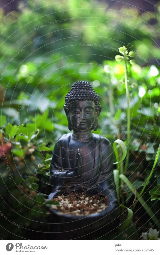 Nature Plant Grass Religion and faith Garden Decoration Bushes Esthetic Foliage plant Buddha Statue of Buddha