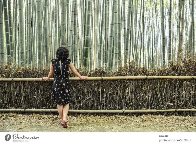 bamboo Human being Feminine Young woman Youth (Young adults) Woman Adults 1 Landscape Plant Bushes Exotic Bamboo Bamboo fence Forest Vertical Line Dress