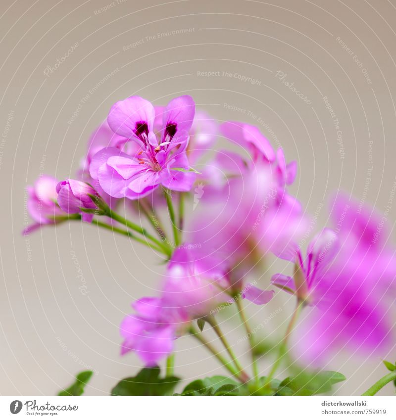 flower Nature Plant Flower Leaf Blossom Pot plant Beautiful Green Pink White Colour photo Exterior shot Day Shallow depth of field