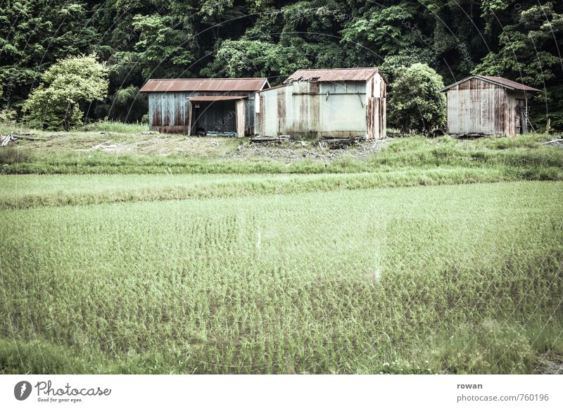 Green House (Residential Structure) Building Field Growth Wet Agriculture Village Hut Manmade structures Damp Japan Foliage plant Agricultural crop Rice