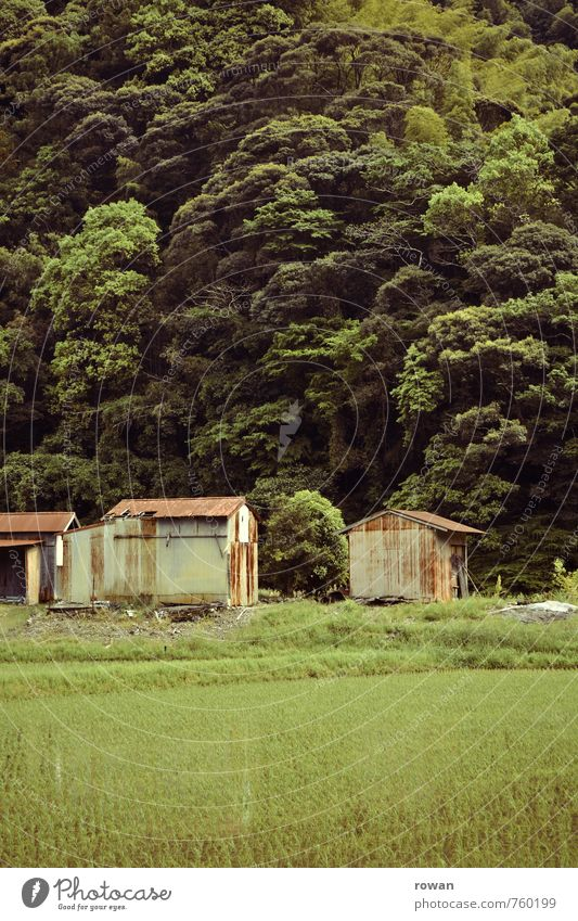Nature Old Green Landscape House (Residential Structure) Forest Building Hill Agriculture Asia Hut Manmade structures Rust Shabby Virgin forest Rice