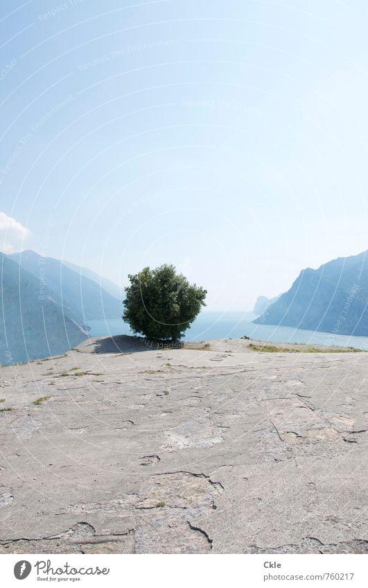 lago di garda Far-off places Summer Sun Mountain Nature Landscape Plant Sky Sunlight Beautiful weather Tree Monte Brione Peak Coast Lakeside Lake Garda Italy
