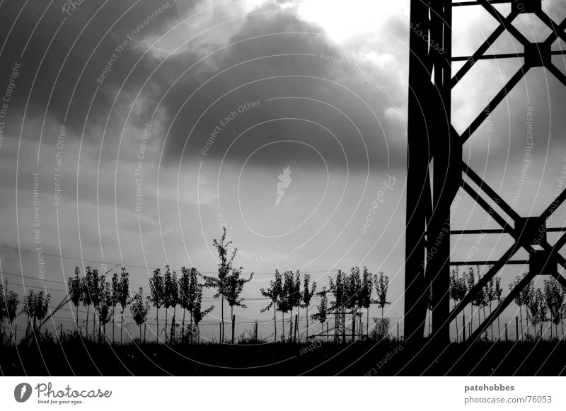 Autumn 06.2 Clouds Bad weather Dark Gray Raincloud Electricity pylon Large Tree Small Maturing time Meadow Industrialization Exterior shot Sky Nature Weather