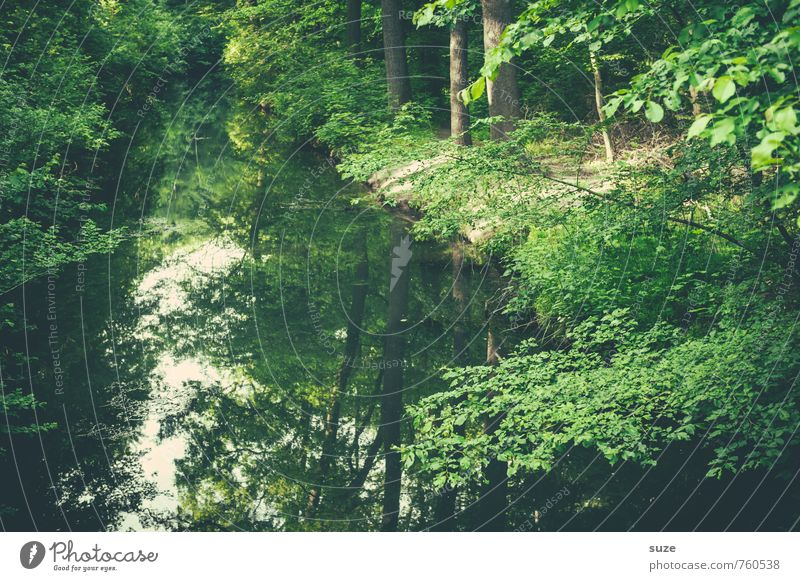 Channel is on green Harmonious Contentment Calm Leisure and hobbies Environment Nature Landscape Plant Water Climate Tree Park River bank Lake Oasis Growth