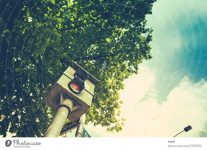 Sky Green Tree Street Car Transport Speed Sign Safety Driving Camera Haste Treetop Motoring Aggravation Road traffic