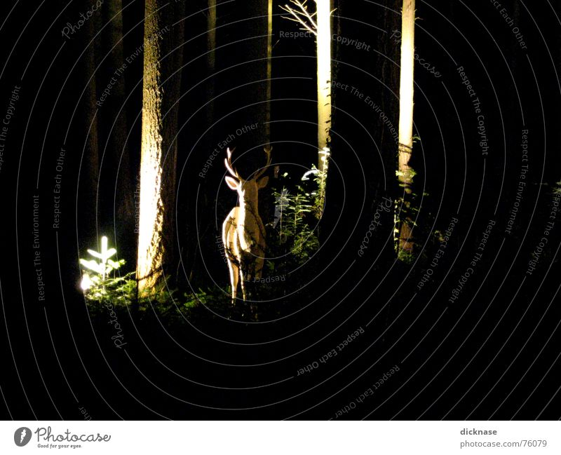 "to the white deer... Forest Night Relief White Majestic Calm Surprise Appearance Tree Saturday art exhibition """"can you find nature?"""" aloof Discover Caution"