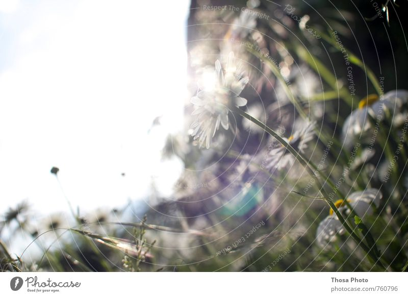 Nature Green Plant Flower Landscape Leaf Yellow Environment Grass Air Glittering Wild Beautiful weather Tangy Insect Blade of grass