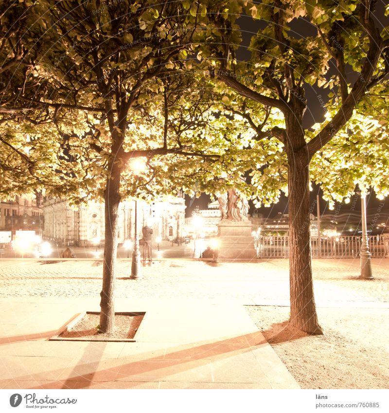 Tree Dresden Brühlsche Terrasse