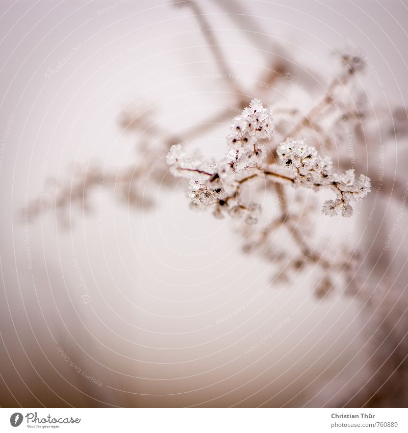 frost Trip Snow Winter vacation Environment Nature Beautiful weather Ice Frost Plant Bushes Relaxation Esthetic Exceptional Brown Black White Moody Colour photo