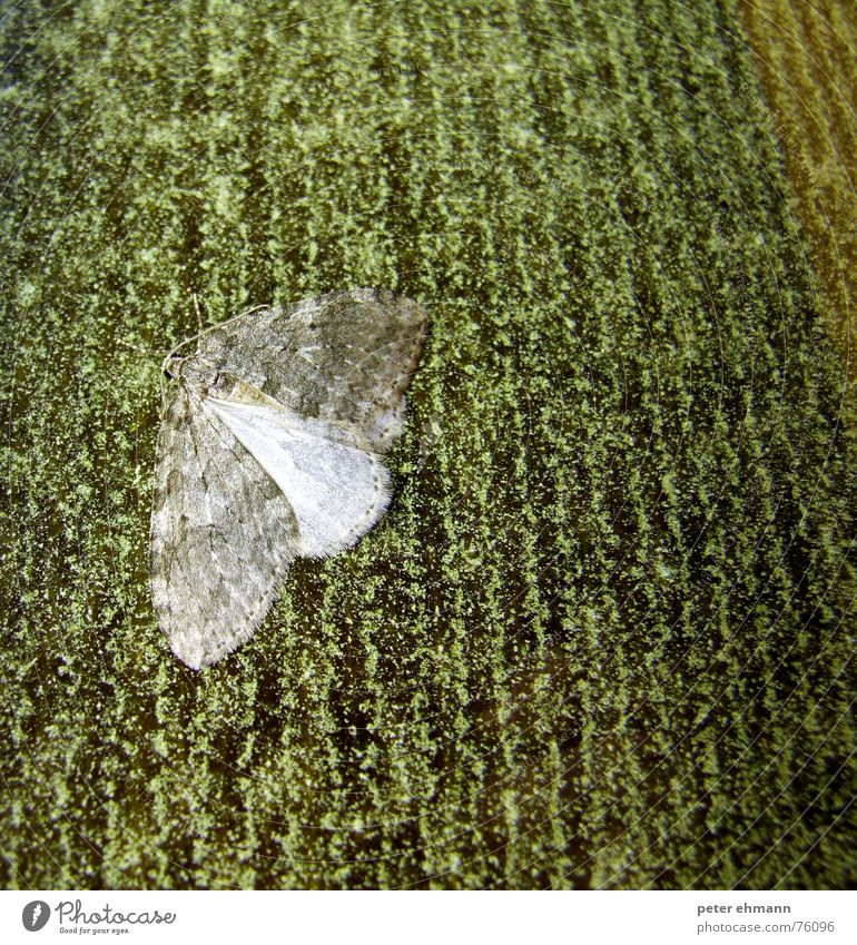 Green Dark Gray Wait Flying Sit Break Wing Insect Tile Butterfly Hide Feeler Camouflage Adjustment