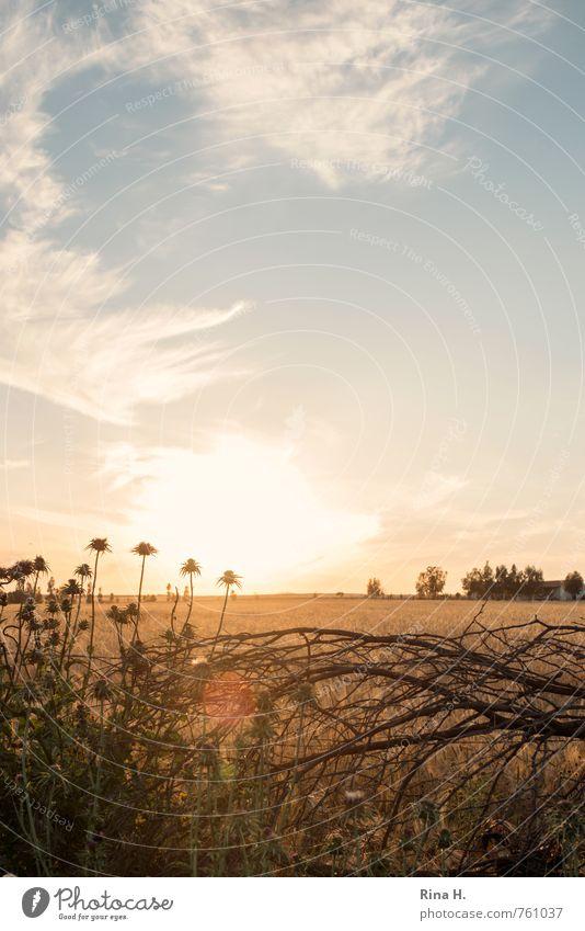 Sky Nature Landscape Clouds Yellow Environment Horizon Field Bushes Beautiful weather Joie de vivre (Vitality) Twig Thistle