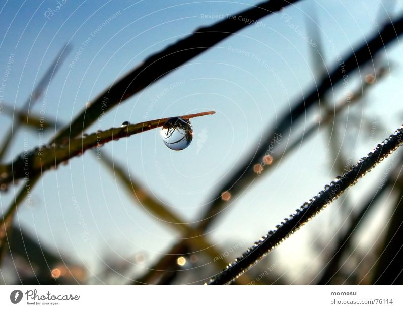Nature Sky Meadow Grass Glittering Drops of water Wet Rope Water