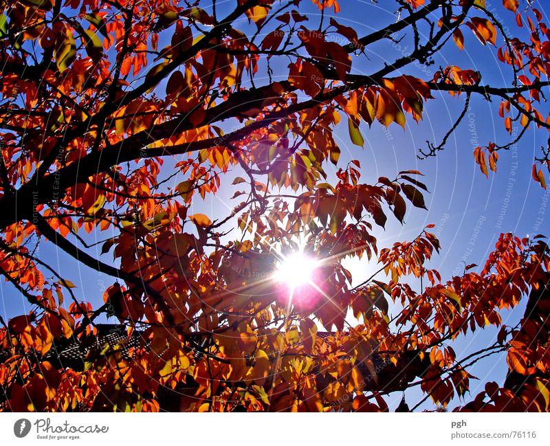 front yard Autumn Leaf Fruit trees Brown Sun Sky Upward Blue