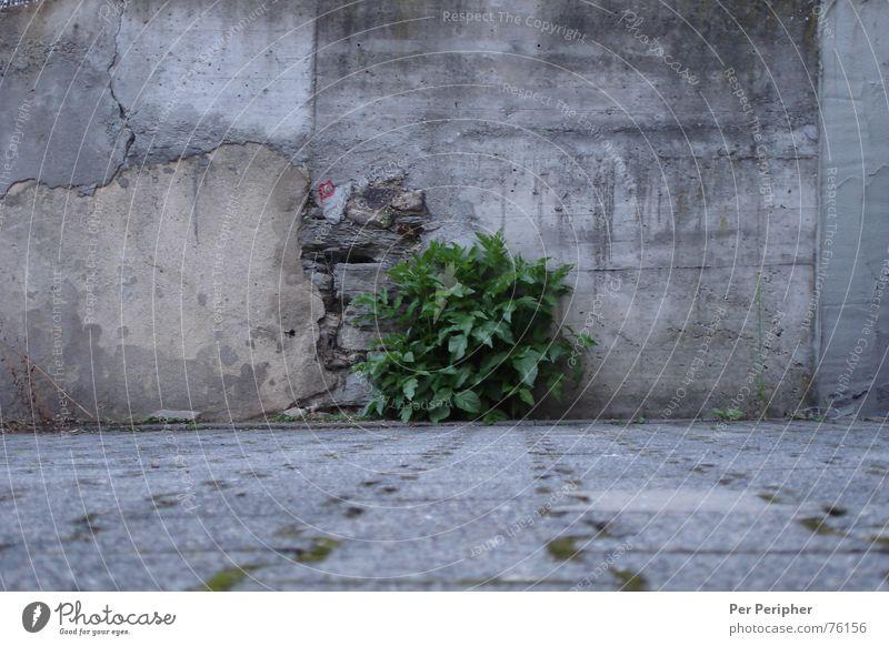 Grey-Green Gray Wall (barrier) Bushes Power Concrete grey bush Nature