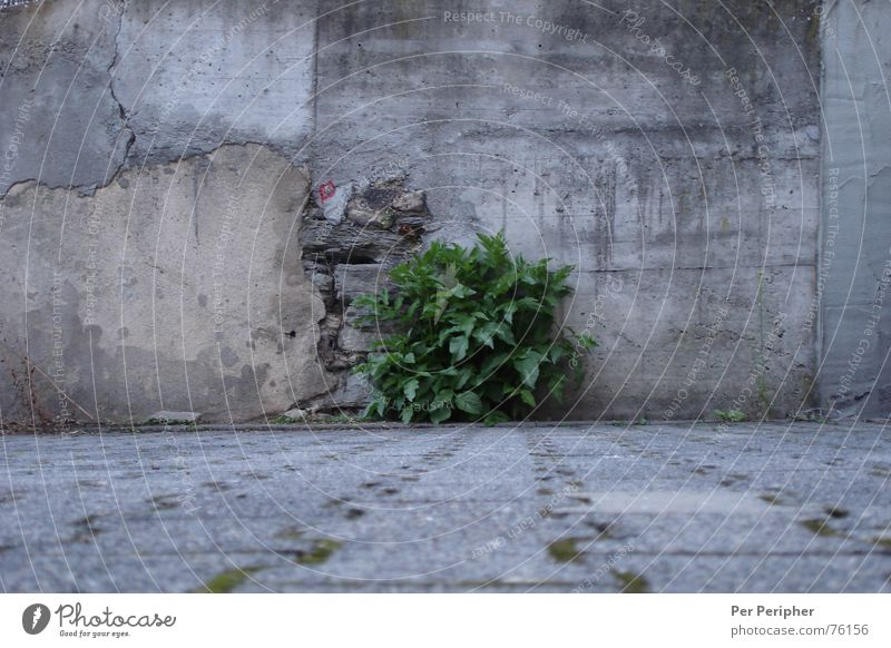 Nature Green Gray Wall (barrier) Power Concrete Bushes