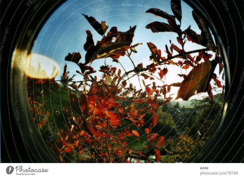 fisheye autumn Herbaceous plants Autumn Leaf Plant Bushes Red Transience Distorted Round Reflection Light Dazzle Hill Foreground Sky Fisheye Early fall Circle